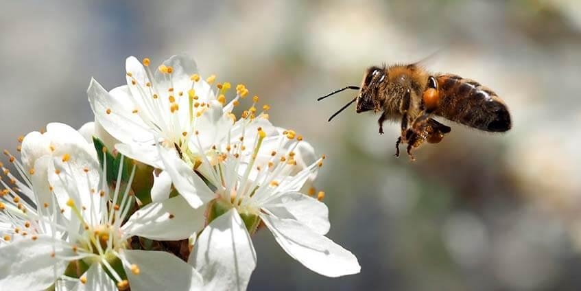 Что надо знать о пчелах