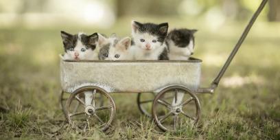 Лекарство от котиков
