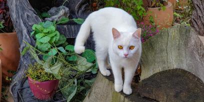Сеченовский университет создает аллерговакцину от кошек