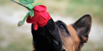 Животные тоже плачут. И чихают